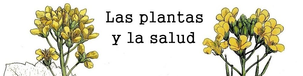 Las plantas y la salud