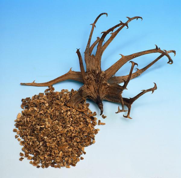 harpagofito raiz artrosis