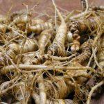 Plantas medicinales adaptógenas