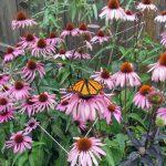 Plantas medicinales para los resfriados según INFITO