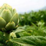 Plantas medicinales, la fitoterapia en el sobrepreso (INFITO)