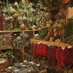 Conservación de las plantas medicinales