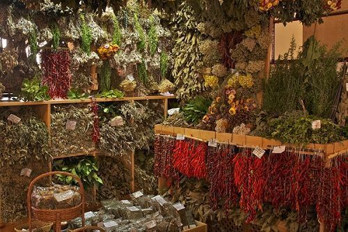 conservacion plantas medicinales
