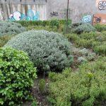 Cultivo de plantas medicinales según cada situación y terreno