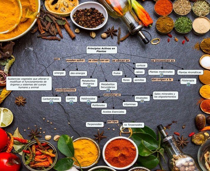 Principios-Activos-plantas-medicinales-sinergia