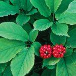 Lista de Plantas Medicinales incluídas en las Monografías realizadas por la Organización Mundial de la Salud – Volumen 4