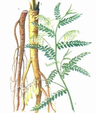 raiz Astragalo (Astragalus membranaceus)