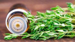 aceite-esencial-de-tomillo-thymus-vulgaris