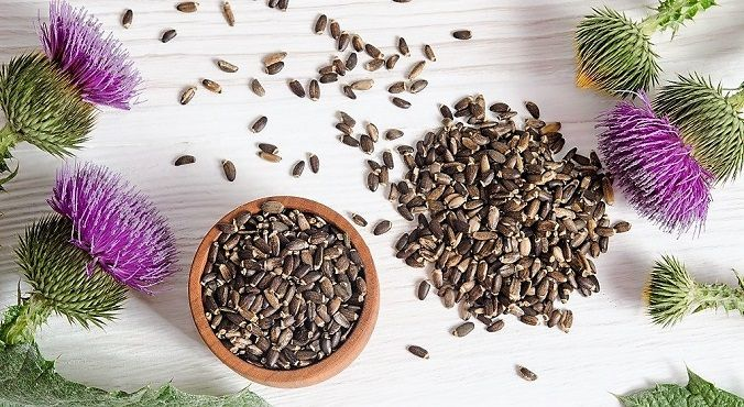 cardo-mariano-silybum-marianum-semillas