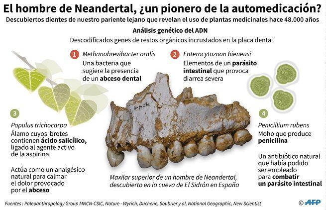 hombre-de-neandertal-plantas-medicinales