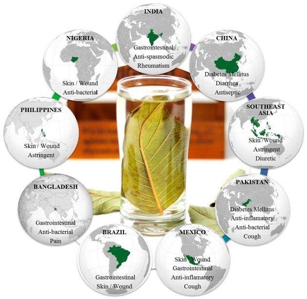 usos-tradicionales-de-las-hojas-de-guayaba