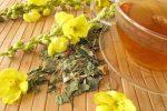 Té de gordolobo, preparación y propiedades